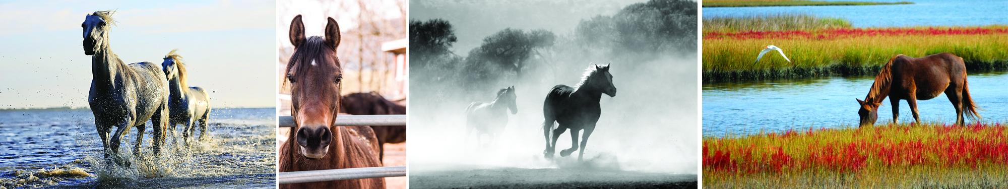 Les différents états du cheval... et donc du mental : fougueux, endormi, coopératif, calme, sauvage