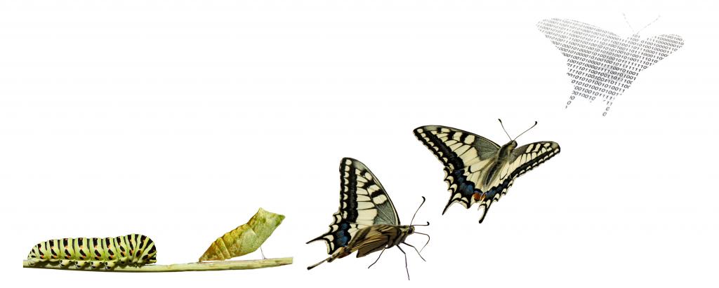 Métamorphose d'une chrysalide en papillon